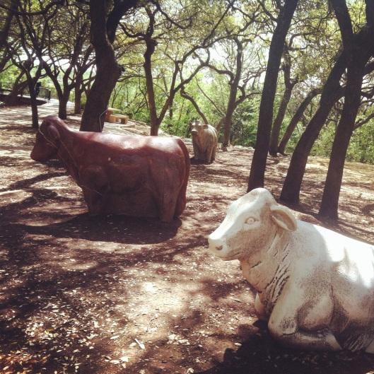 """""""Arboretum Cows"""" by Harold Clayton"""